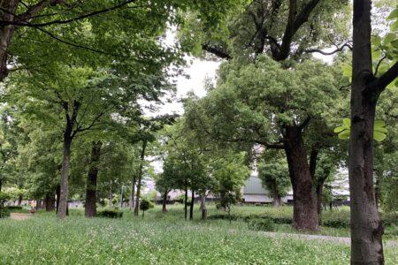 雨の公園もなかなか😊
